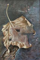 Herfstblad in plas